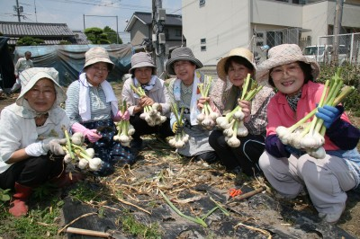ふくやま・福山北地域女性部ニンニク収穫