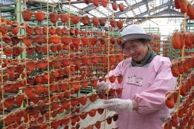 おのみち・串柿つくり